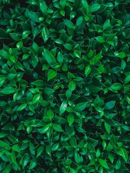 Fundo de folhas verdes.