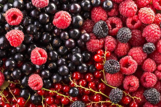 Fundo de framboesa, amora e groselha. fundo de frutas.
