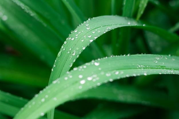 Fundo de grama com gotas de água