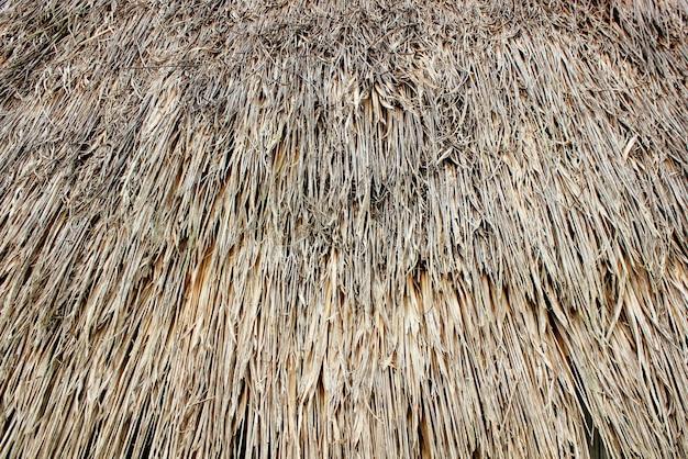Fundo de grama do telhado