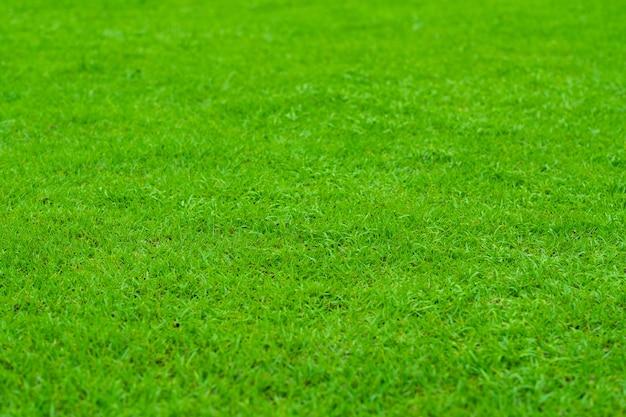 Fundo de grama verde, campo de futebol