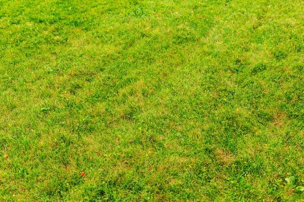 Fundo de grama verde close-up