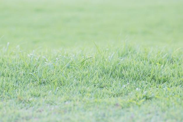 Fundo de grama