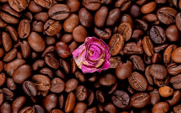 Fundo de grãos de café torrados com botão de rosa na vista superior meio