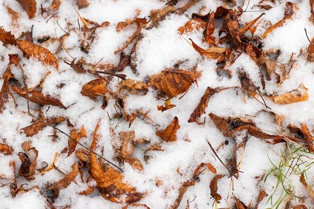 Fundo de inverno com folhas secas caídas cobertas de neve