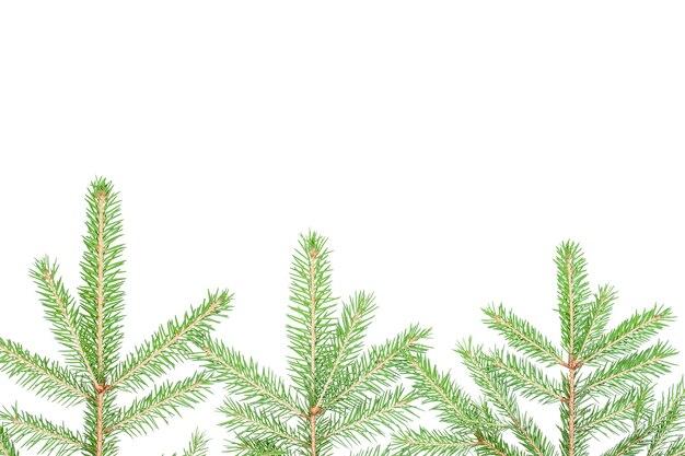 Fundo de inverno com galhos de árvores de natal isolados no branco