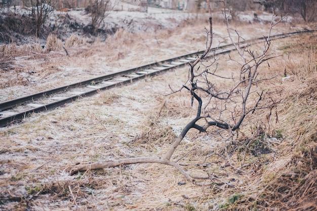Fundo de inverno nevado, grama congelada, tempo frio