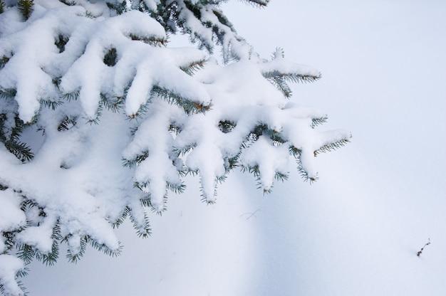 Fundo de inverno. uma árvore conífera no gelo e na neve
