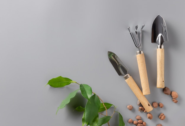 Fundo de jardinagem com pedágios e planta jovem