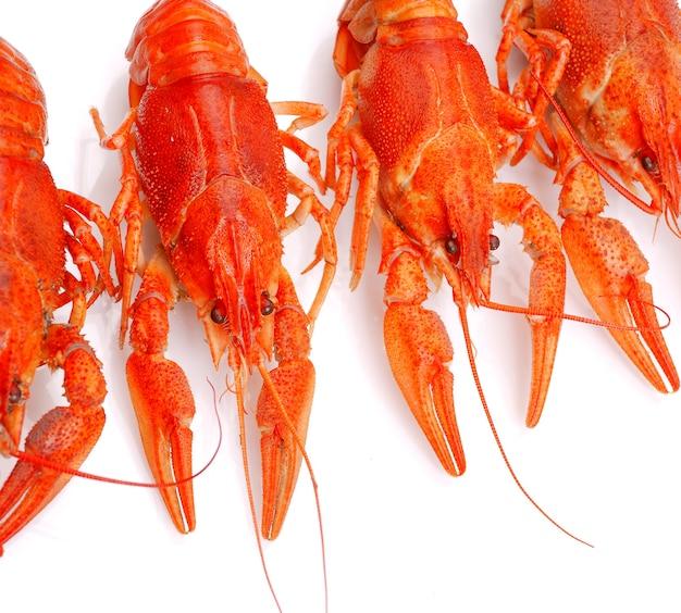 Fundo de lagostas isoladas
