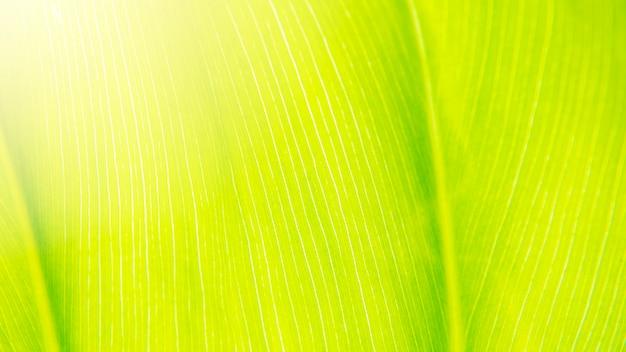 Fundo de licença verde com luz do sol