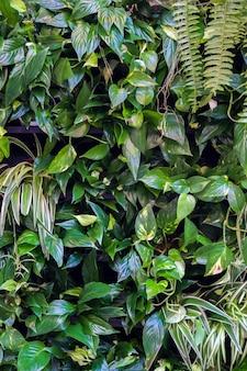 Fundo de lindas folhas verdes em casa verde tropical