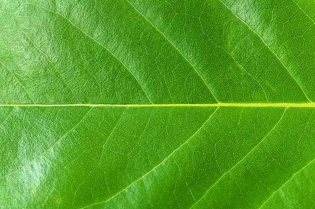 Fundo de macro textura de folha verde