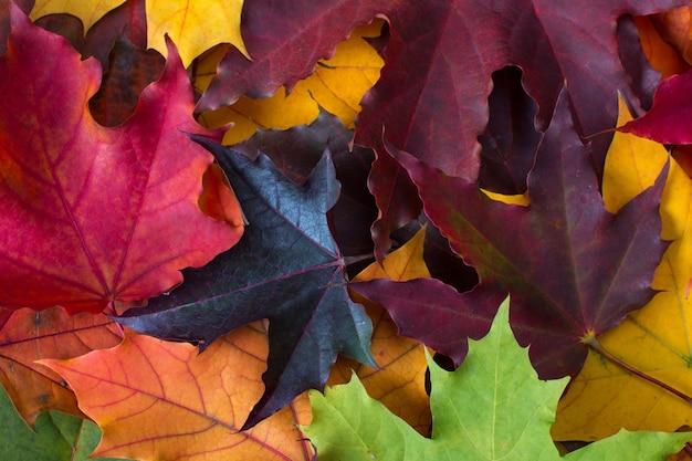 Fundo de madeira com folhas coloridas de outono. paleta de cores de outono