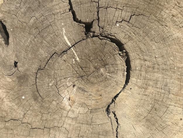 Fundo de madeira da parede da textura do núcleo da casca suja da rachadura.