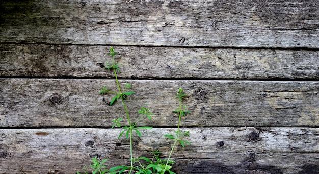Fundo de madeira de painel antigo