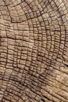Fundo de madeira de um naufrágio na costa do esqueleto na namíbia.