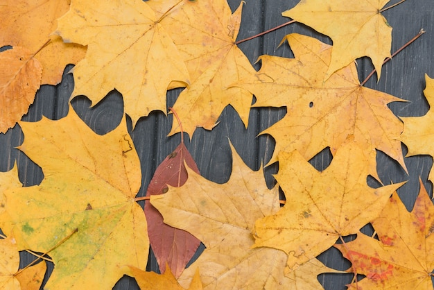 Fundo de madeira escuro com folhas amarelas de outono