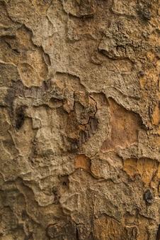 Fundo de madeira velho da textura da casca de árvore. padrão de casca de árvore.