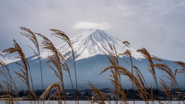 Fundo de montanha fuji com a grama de prado dourado