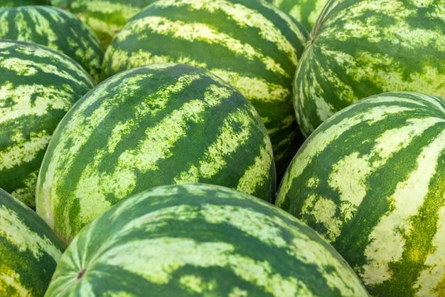 Fundo de muitas melancias maduras, verdes e listradas