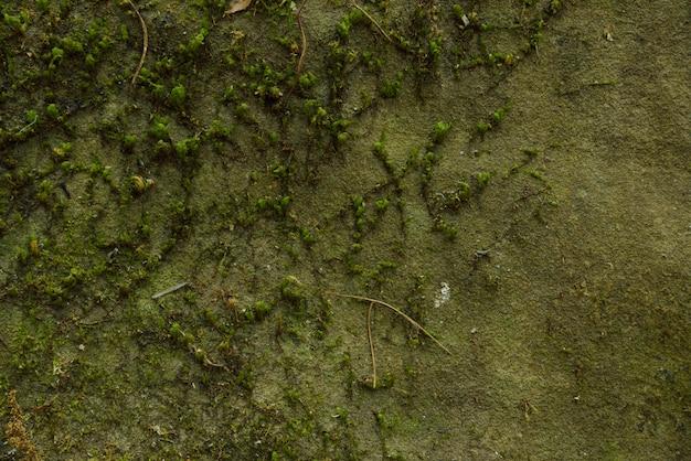 Fundo de musgo na natureza