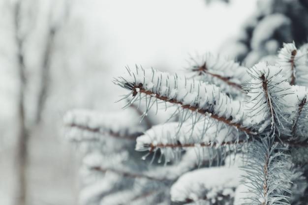Fundo de natal bonito com abeto fresco. feliz natal e feliz ano novo fundo de saudação.