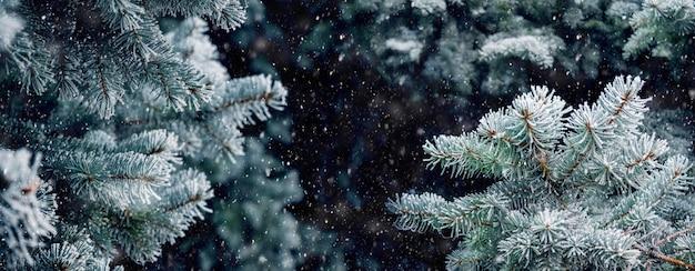 Fundo de natal com galhos cobertos de geada de um luxuoso abeto durante uma nevasca