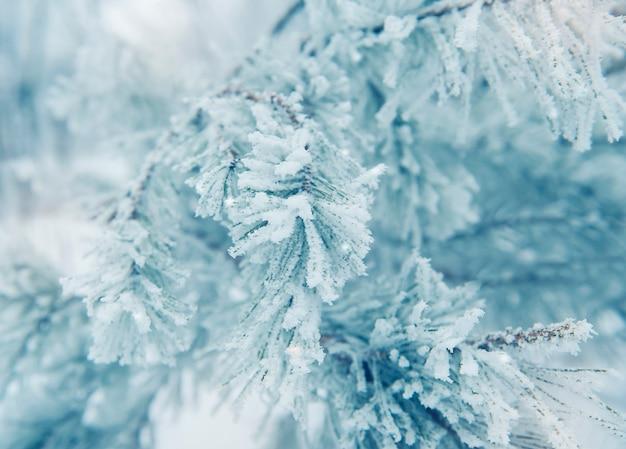 Fundo de natal com galhos de pinheiro coberto de neve