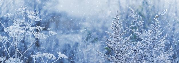 Fundo de natal com hastes de plantas secas cobertas de geada no fundo desfocado durante a queda de neve