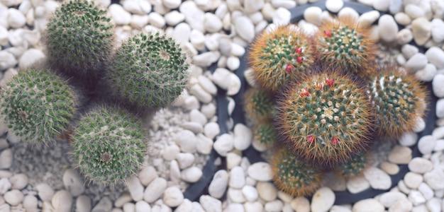 Fundo de natureza cactus para design de banner da web.