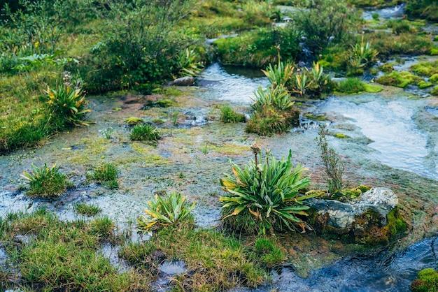 Fundo de natureza cênica com vegetação exuberante no riacho da pequena montanha.