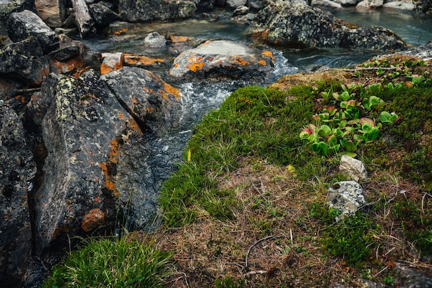 Fundo de natureza cênica de fluxo de água turquesa claro entre rochas com musgos, líquenes e flora selvagem. paisagem atmosférica de montanha com riacho de montanha transparente. córrego da bela montanha.