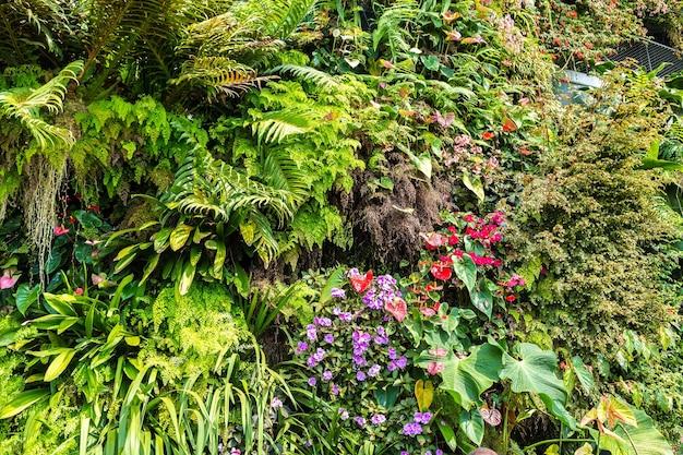 Fundo de natureza com folha verde tropical