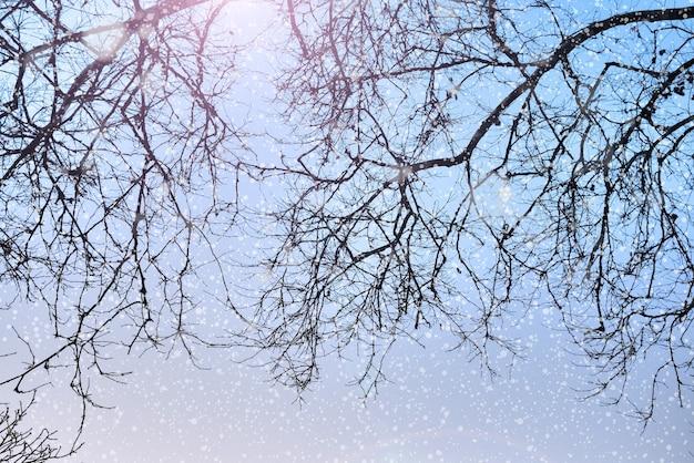 Fundo de natureza de inverno com silhuetas de árvores e neve