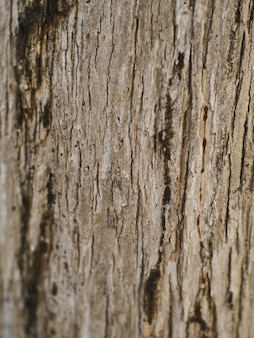 Fundo de natureza de textura de madeira