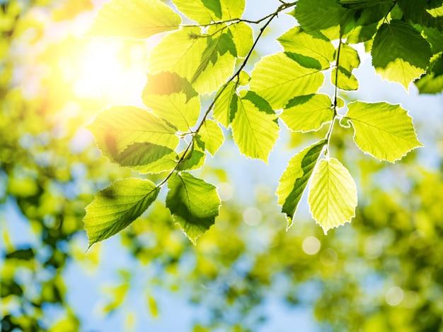 Fundo de natureza primavera com folhagem de árvores verdes