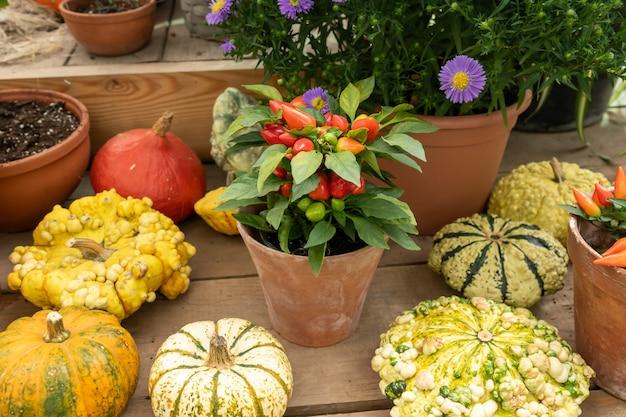 Fundo de outono abóbora. close-up de mini abóboras no mercado dos fazendeiros