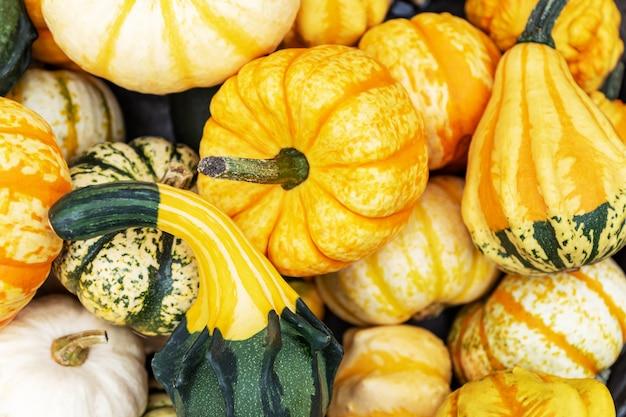 Fundo de outono abóbora. feche acima das mini abóboras decorativas diferentes no mercado dos fazendeiros.