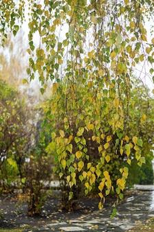 Fundo de outono. árvores com folhas amareladas