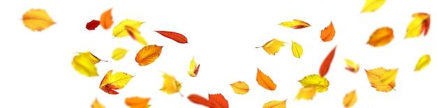 Fundo de outono bonito com folhas amarelas e vermelhas.