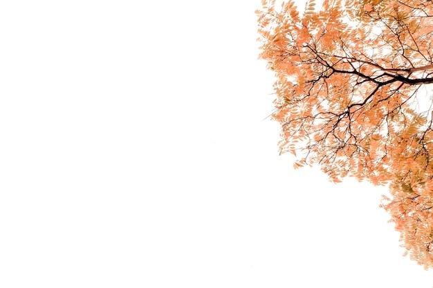 Fundo de outono com bordo dourado e folhas de carvalho. fundo com folhas de outono caindo vermelhas, laranja, marrons e amarelas