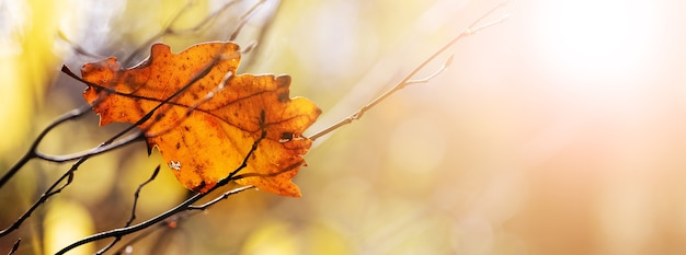 Fundo de outono com folha de carvalho seca em um fundo desfocado em tempo ensolarado