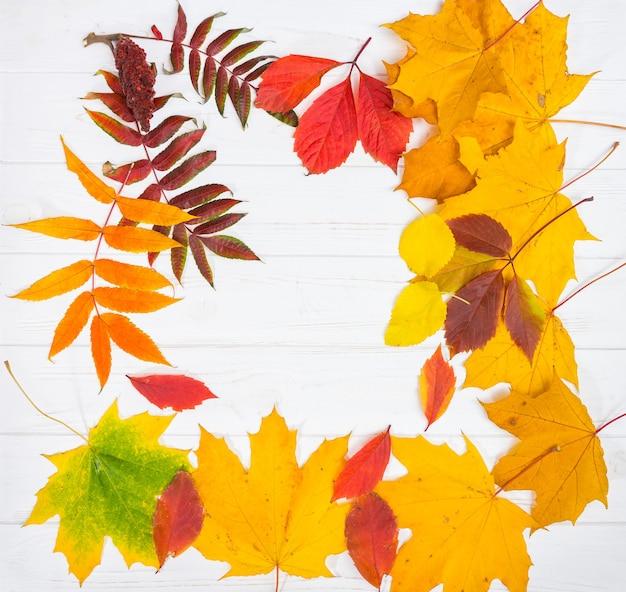 Fundo de outono com folhas amarelas, vermelhas e verdes na mesa de madeira branca com espaço de cópia.