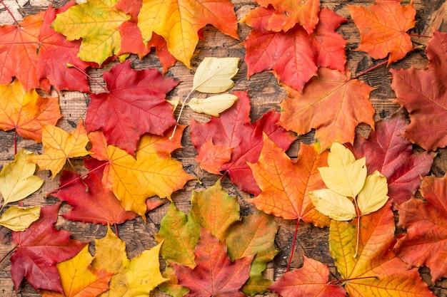 Fundo de outono com folhas coloridas em uma placa de madeira