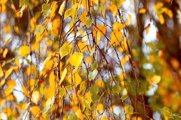 Fundo de outono com folhas douradas de outono em tempo ensolarado