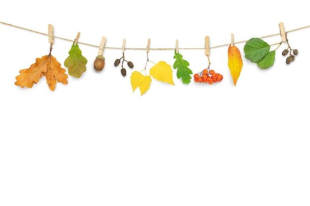Fundo de outono com folhas penduradas em prendedores de roupa isolados no branco