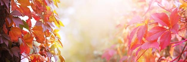 Fundo de outono com folhas vermelhas brilhantes em um fundo desfocado de outono