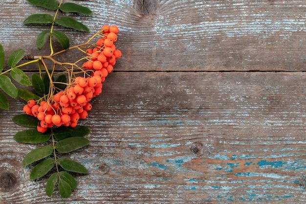 Fundo de outono com ramo de rowan na velha mesa de madeira, com espaço de cópia, vista superior.