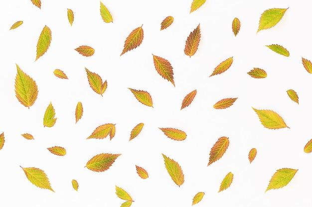 Fundo de outono de folhas amarelas